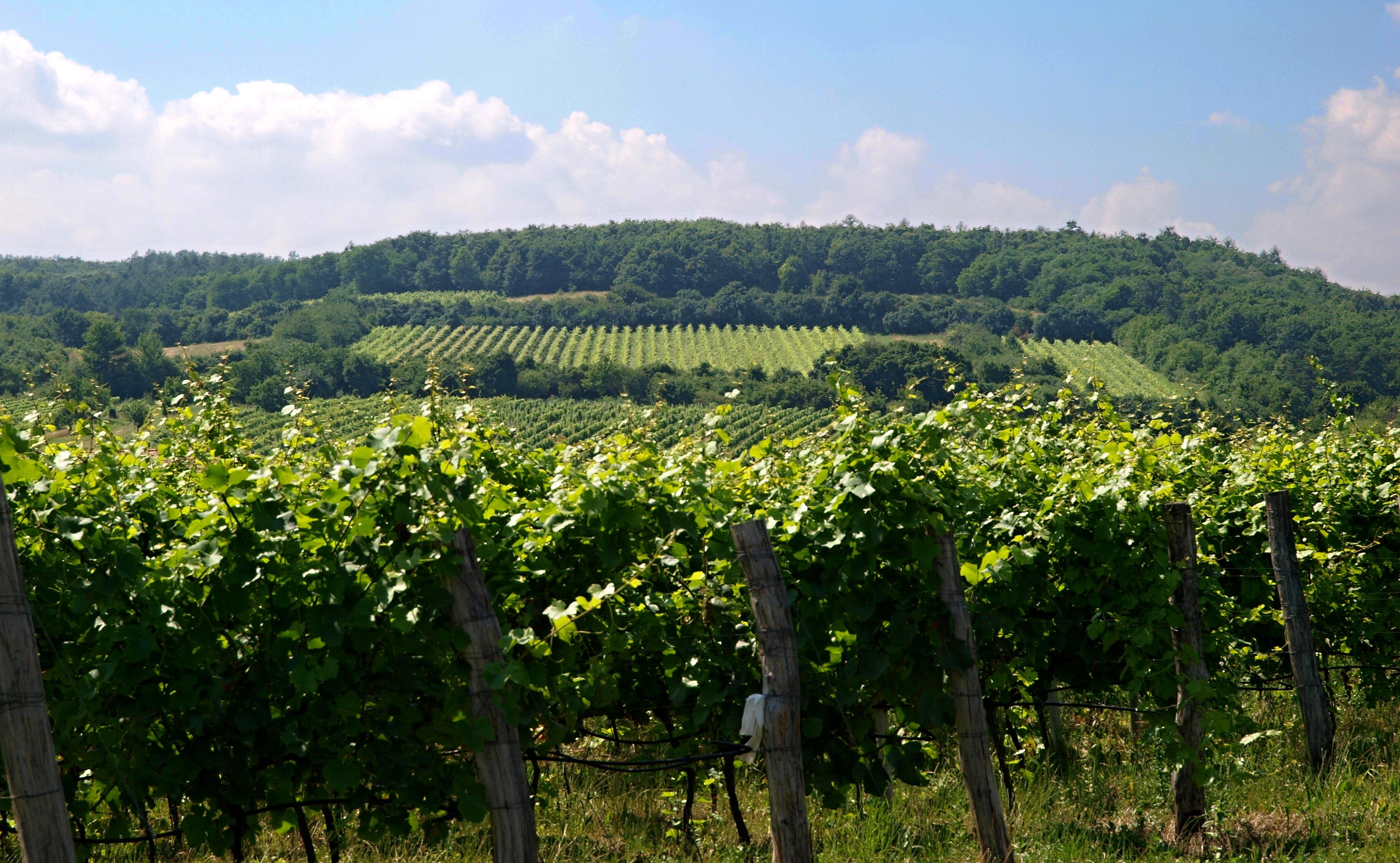 Vinařský místopis