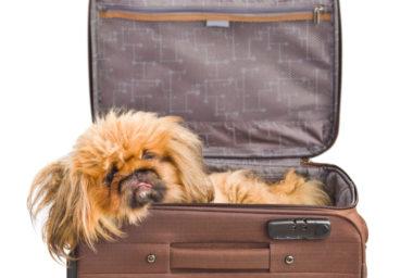 Bojíte se létání? Aplikujte terapii mazlení se psem, tak jako ve Wisconsinu