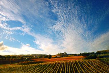 Castello Banfi: Mladá pýcha toskánského vinařství