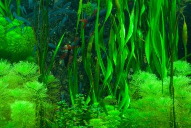 Zelenina ze dna oceánů