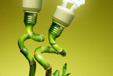 Zelené inspirace