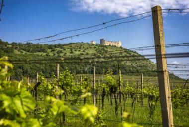 Potvrdilo se, že vína VOC jsou vysoce kvalitní