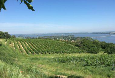 Situace na jihomoravských vinicích