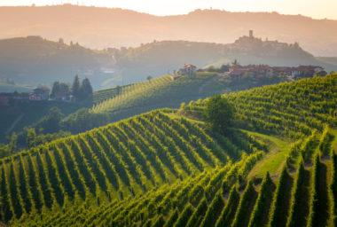 Gallo pokračuje v nákupech slavných vinařství