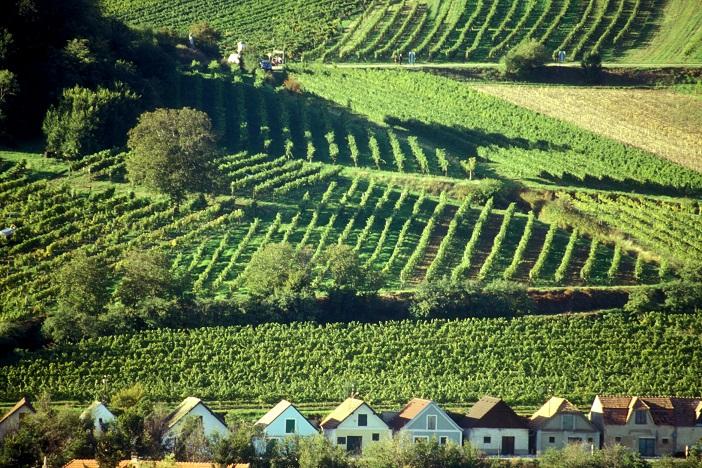 Burčáková a dýňová slavnost a vinný podzim jen kousek za hranicemi v regionu Land um Laa ve Weinviertelu