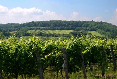 Vinařský místopis – III. díl