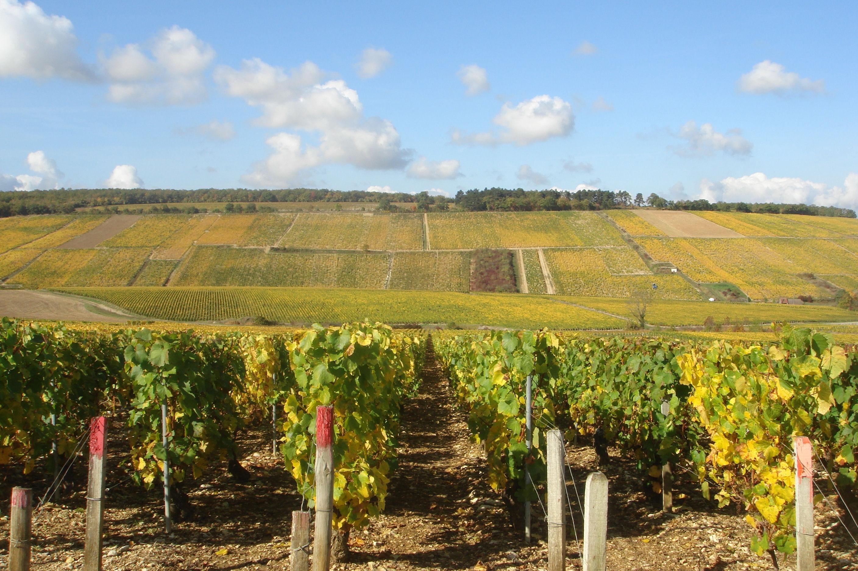 Chablis: Minerální unikát burgundského vinařství