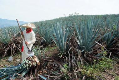 Tequila, Češi a tipy na Margaritu podle Saši Mikšovice