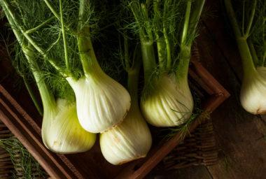Fenykl,  lahůdková zelenina sanýzovou chutí