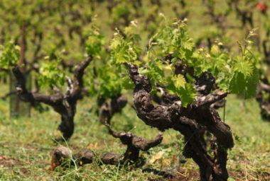 BIO víno, hit nebo past?