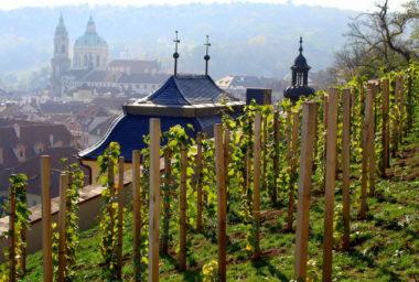 Češi vypijí 2,1 milionu hektolitrů vína za rok, neumí ho ale moc servírovat
