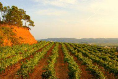 Španělsko: nový rekord v prodejích biopotravin