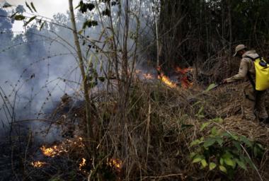 Požáry v amazonském pralese zakládají farmáři. Řešením je jíst méně masa