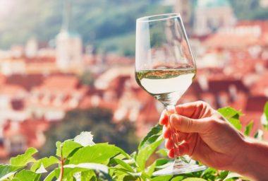 Svatomartinská vína ročníku 2019 budou skvělá!
