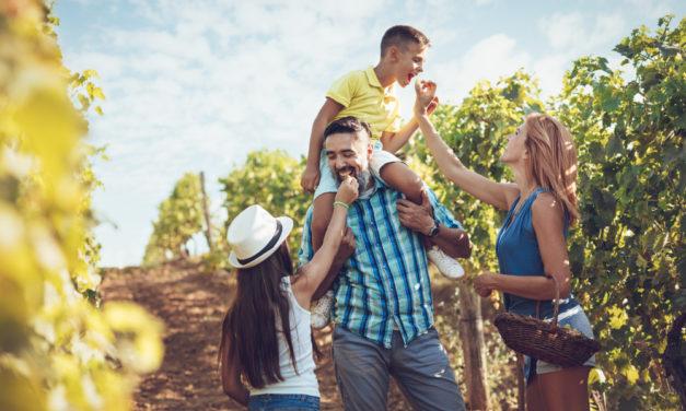 Vinařské stezky a cyklostezky